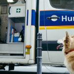 Artikel Hund und Herrchen
