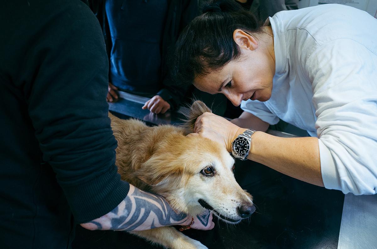 Tierärztin untersucht die Ohren eines Hundes