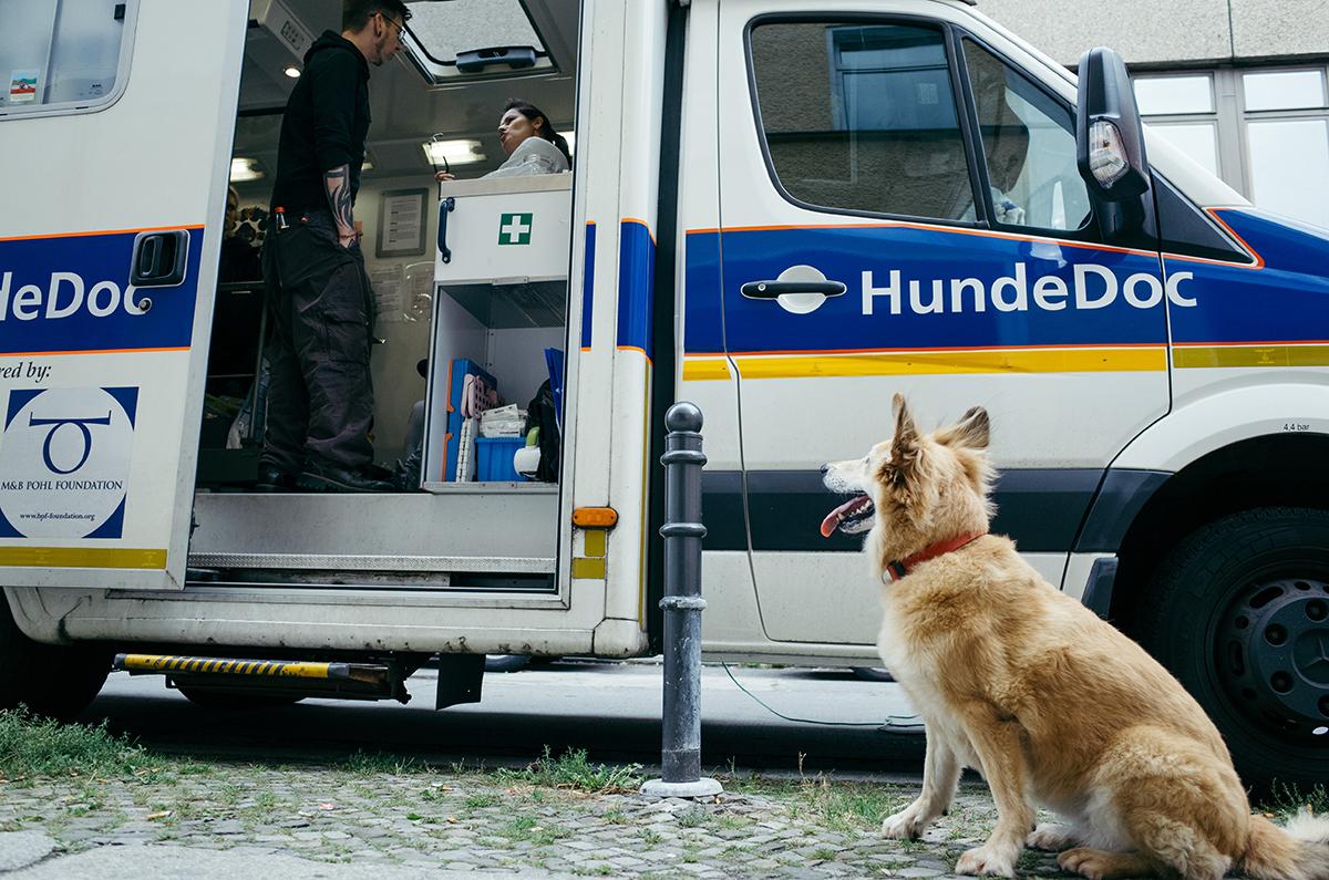 """Hund mit hellem Fell sitzt vor Krankenwagen mit der Aufschrift """"HundeDoc"""""""